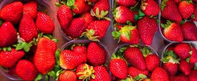 Ny jordgubbebakgrund med högar av mogna jordgubbar i a royaltyfri foto