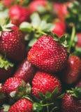 Ny jordgubbetextur, tapet och bakgrund, selektiv fokus Arkivfoton