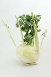 Ny kålrabbi med gröna sidor (Brassicaoleracea L var caulorapaDC) Arkivfoto
