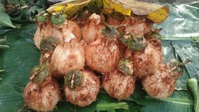 ny kokosnöt royaltyfria bilder