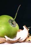 ny kokosnöt Arkivbild