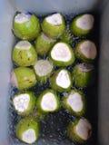 ny kokosnöt Royaltyfri Foto