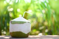 Ny kokosnötfruktsaft för dryck som dricker ung kokosnötfrukt på bakgrund för sommarnaturgräsplan royaltyfri fotografi