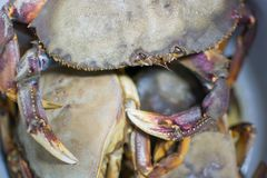 ny krabba arkivbilder
