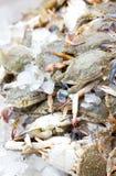 Ny krabba. royaltyfri foto
