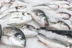 ny kyld havsfisk på is Ny fisk från havet till marknaden som visas på en tjock säng av ny is som inte smälter till Royaltyfria Foton