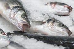 ny kyld havsfisk på is Ny fisk från havet till marknaden som visas på en tjock säng av ny is som inte smälter till Royaltyfri Foto