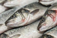 ny kyld havsfisk på is Ny fisk från havet till marknaden som visas på en tjock säng av ny is som inte smälter till Arkivbild