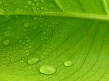 ny leaf Royaltyfri Foto