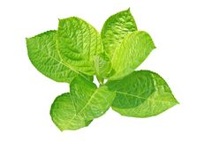 ny leaf Royaltyfri Bild