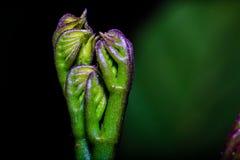 ny leaf Arkivfoton