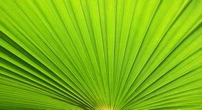 ny leaf för bakgrund Arkivfoton