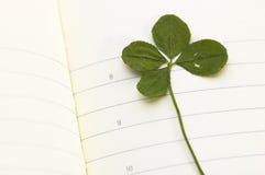 ny leaf för växt av släkten Trifoliumdag fyra Royaltyfria Bilder