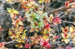 Ny leaftillväxt royaltyfri fotografi