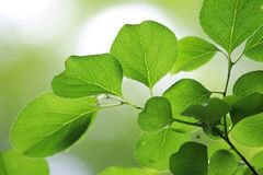 ny leavessommar Arkivfoto