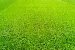 Ny lekplats för naturlig ny textur för grönt gräs Royaltyfri Foto