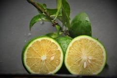 ny limefrukt royaltyfri foto