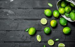 Ny limefrukt i hinken royaltyfri fotografi