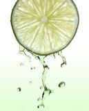 Ny limefruktskiva med fruktsaftdroppar Royaltyfri Foto