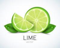 Ny limefruktskiva med sidor som isoleras på vit bakgrund Vektorillustration för den dekorativa affischen, emblemnaturprodukt Royaltyfri Foto