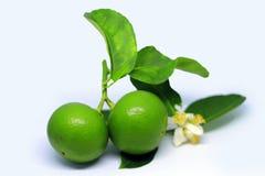 ny limefruktwhite f?r bakgrund royaltyfria foton