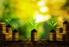 Ny liten trädtillväxt på guld- mynt med abstrakt suddig ny grön naturbakgrund Royaltyfri Bild