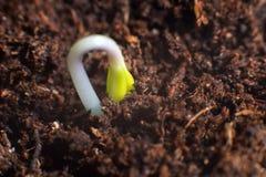 Ny livstart nya början Växtgroende på jord Royaltyfria Foton
