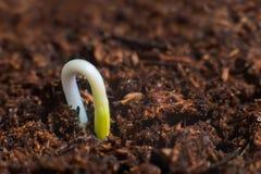 Ny livstart nya början Växtgroende på jord Royaltyfri Fotografi