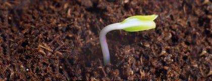 Ny livstart nya början Växtgroende på jord Arkivfoto
