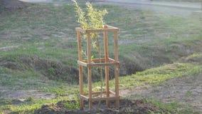 ny livstid växande växter Väx träd i parkera arkivfilmer
