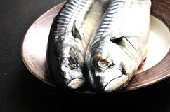 Ny makrill för att laga mat på en svart bakgrund Royaltyfria Foton