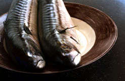Ny makrill för att laga mat på en svart bakgrund royaltyfri foto