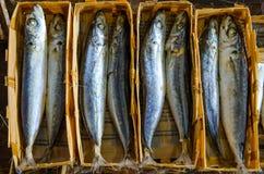 Ny makrillfisk i marknaden arkivbilder