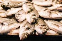 Ny makrillfisk på den havs- marknaden, traditionell fisk i marknad Royaltyfria Foton