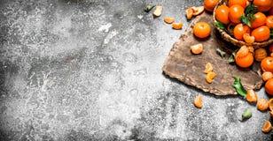 Ny mandarine i korgen Fotografering för Bildbyråer