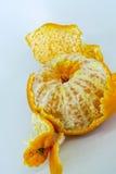 ny mandarinorange Royaltyfri Bild