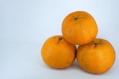 ny mandarinorange Fotografering för Bildbyråer