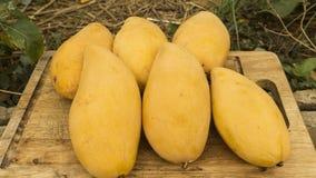 Ny mango med wood bakgrund Arkivfoto