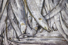 ny marknad för fisk Arkivfoto