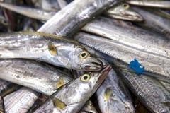 ny marknad för fisk Arkivfoton