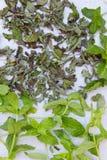 Ny mintkaramell för att torka och torr mintkaramell på en neutral grå bakgrund Royaltyfri Bild