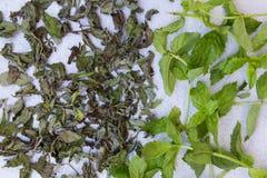 Ny mintkaramell för att torka och torr mintkaramell på en neutral grå bakgrund Royaltyfri Fotografi