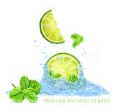 Ny mintkaramell och limefrukter i vattenfärgstänk Arkivbild