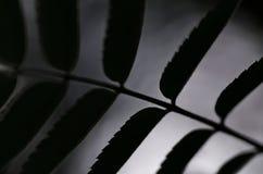 Ny modell för bladnaturbakgrund Arkivfoto