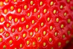Ny mogen jordgubbenärbild Makrofoto av jordgubben Arkivfoton