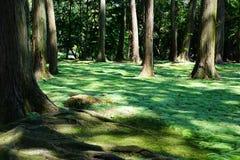 Ny mossa i trädgården av Toshodaiji Arkivfoton