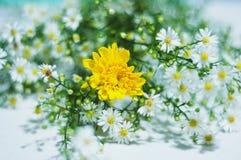 Ny, mycket liten och härlig blomma arkivbild