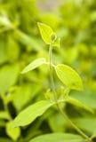 Ny ny leaf Fotografering för Bildbyråer
