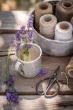 Ny och doftande lavendel som är klar att torka i bygd royaltyfri fotografi