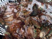 Ny och levande abalone som säljs i den havs- marknaden Arkivbild